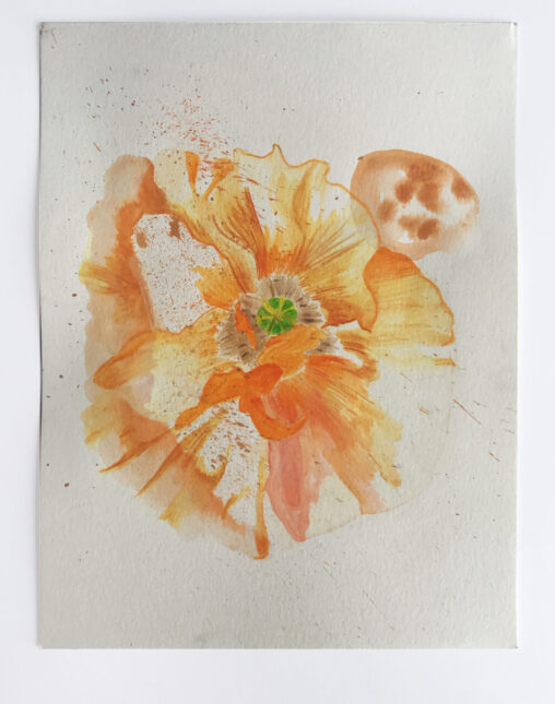 Drawing of a blooming poppy.