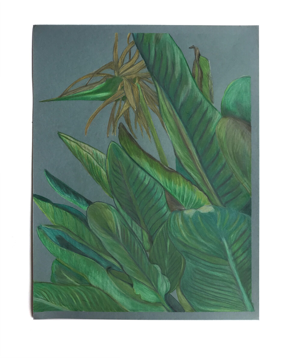 Drawing of a Bird of Paradise plant on a blue background.