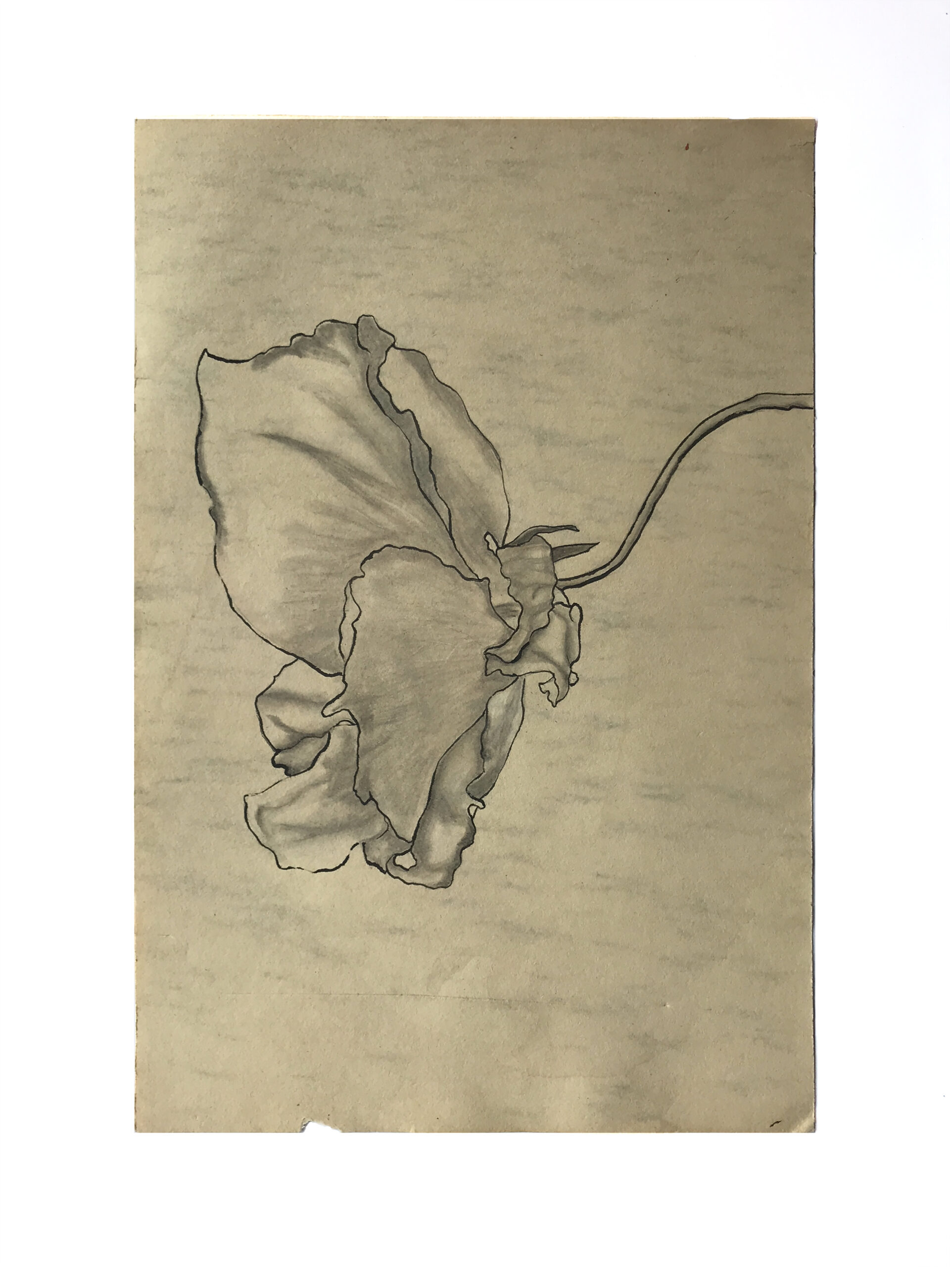 Drawing of a rose.