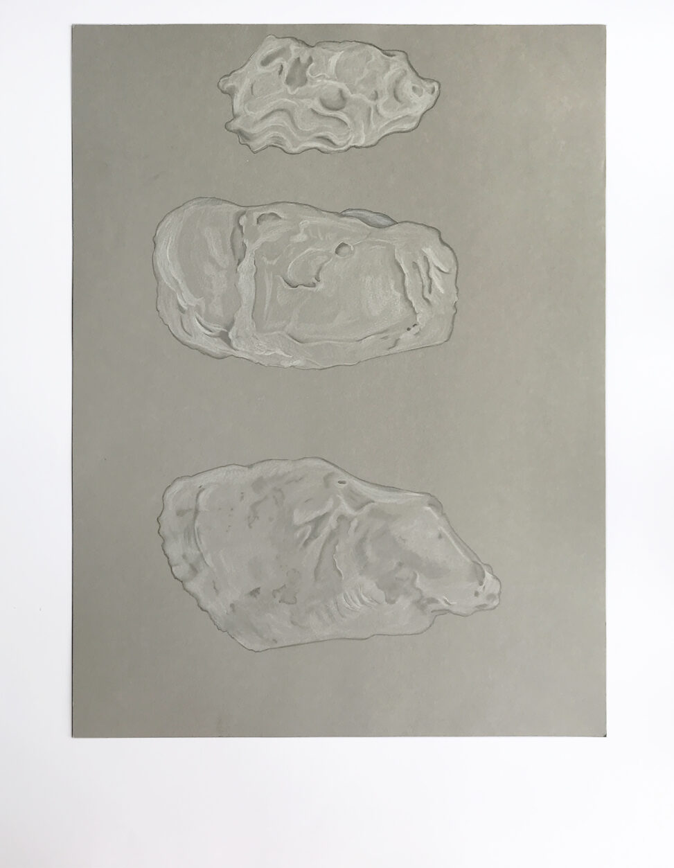 Drawing of three oyster shells on a gray background.