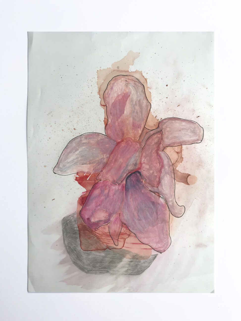 Drawing of a magnolia flower.