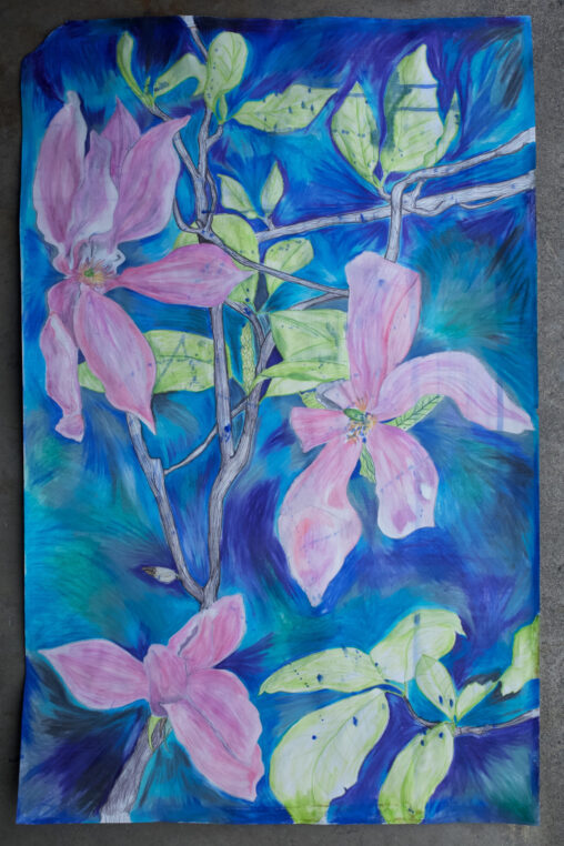Large drawing of pink magnolia flowers.