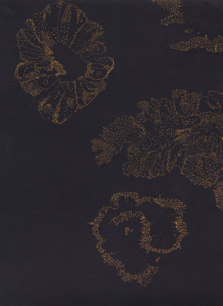 A pointillism drawing of lichen forms on black paper.