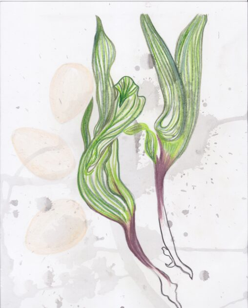 A drawing of two spring onions and three eggs on a messy background
