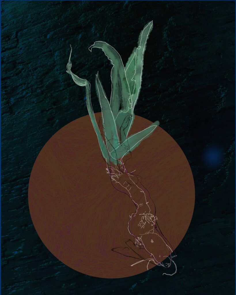 Digital drawing of an iris plant, including rhizome. Sketch of a woman is super imposed on top.